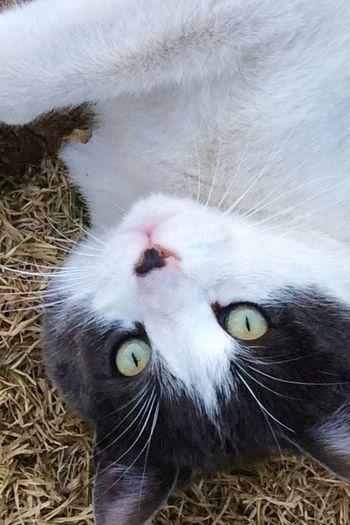 Domestic Cat Domestic Animals Animal Themes Pets Feline One Animal Mammal
