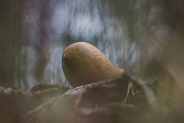 Toy Toys Wooden Wooden Toys Bird Wood Forest Tree Craft Crafts Handmade Close-up Selective Focus No People Nature Mushroom Day Plant Fungus Land Animal Vegetable Animal Wildlife Outdoors Beauty In Nature Focus On Foreground Growth Vulnerability  Food Softness