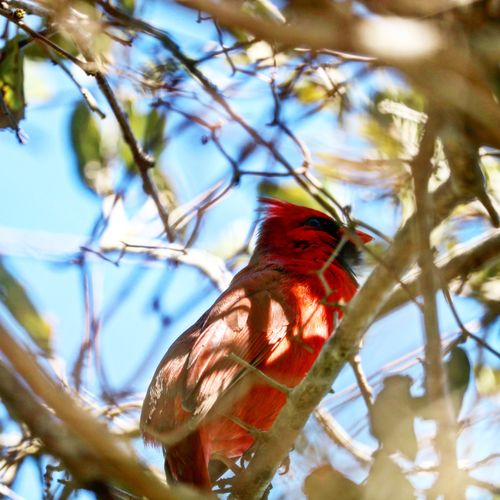 Virginia Life Animal Themes Animal Wildlife Animal Animals In The Wild One Animal Bird Low Angle View Tree No People Perching Branch Nature Beauty In Nature Close-up Outdoors