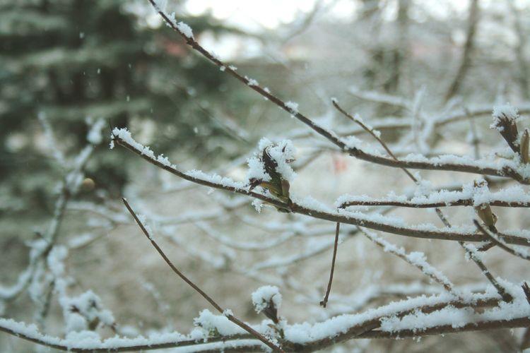 Spring Is Coming  Primavera Noruega Norge Norway Brotes Nieve Snø Snow Late Winter Cold Frio Copos Kaldt Snowflakes First Eyeem Photo