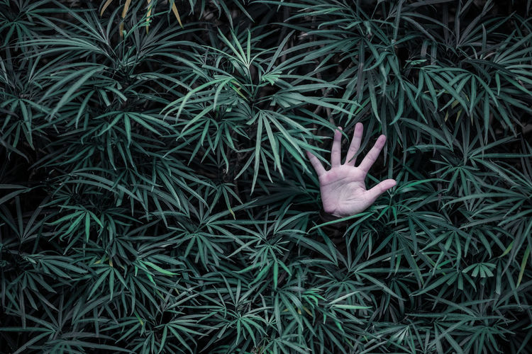 Cropped hands amidst plants