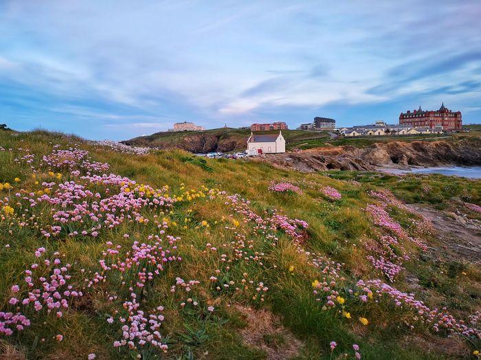 Coastal Flowers #coast #sea #eyembestshot #eyemnaturelover #MobilePhotography Flower Sky The Mobile Photographer - 2019 EyeEm Awards