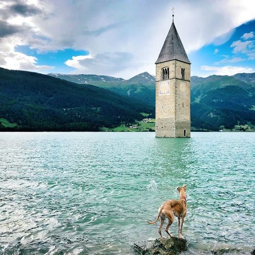 View of dog on lake against mountain