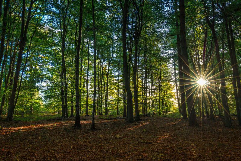 Starburst Sun StarBurstPhotography Tree Forest Land Plant WoodLand Beauty In Nature Tranquility Sunlight Tree Trunk Tranquil Scene Scenics - Nature Trunk Environment