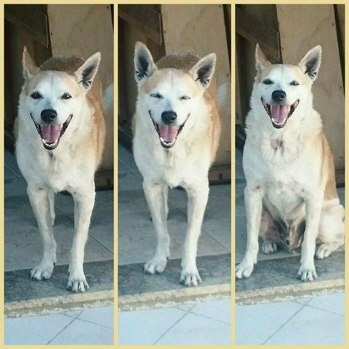 Smile dog Dog Smile Beatiful Smile Beutigul Dog