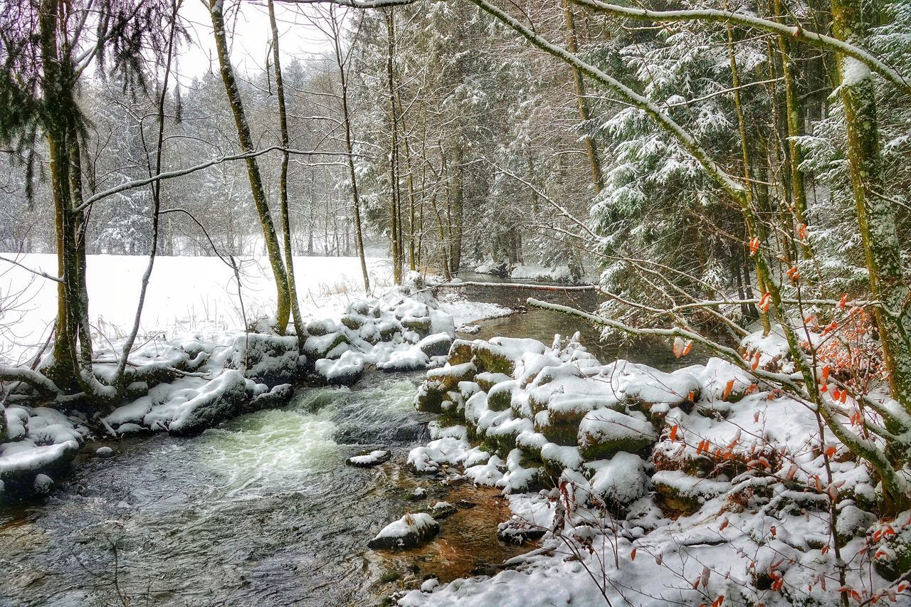tree, snow, plant, winter, cold temperature, forest, no people, nature, beauty in nature, tranquility, land, day, non-urban scene, flowing water, scenics - nature, flowing, bare tree, downloading, tranquil scene, outdoors, stream - flowing water, woodland