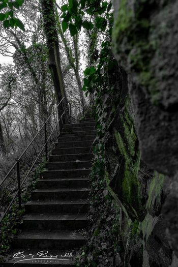Low angle view of steps amidst trees in forest