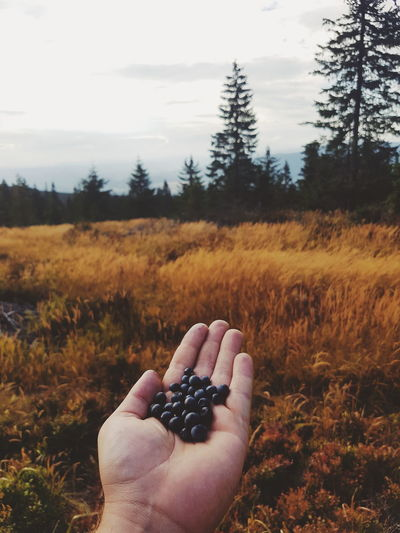 Human Body Part Human Hand Autumn One Person Tree Nature Forest People Outdoors Day Close-up Sky Only Men Pelephotography Forrest Woods Wild Nature Transylvania Pele Photography Autumn Is Coming Autumn Beauty In Nature Fruits Wild Fruits