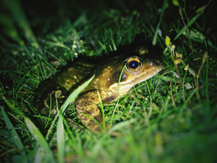Frog Frogs Danmark Sønderho Nørdby Fanø Nature Low Angle View Google Snapseed Snapseed Iphone6 The Great Outdoors - 2016 EyeEm Awards IPhone