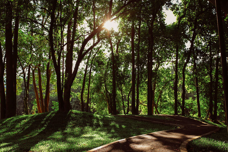 Beauty In Nature Forest Green Color Growth Land Landscape Lens Flare Nature No People Outdoors Park Plant Sun Sunlight Tranquility Tree WoodLand