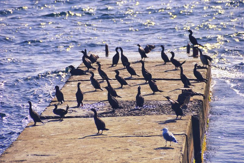 Water Bird Animals In The Wild Animal Themes Nature Birds Large Group Of Animals Animal Wildlife Sea Beauty In Nature No People Outdoors Bird Photography Birds Of EyeEm  Perching Loon Seagull Seaside Reflection Seashore Ocean View Ocean Sea View Seascape Cormoranes