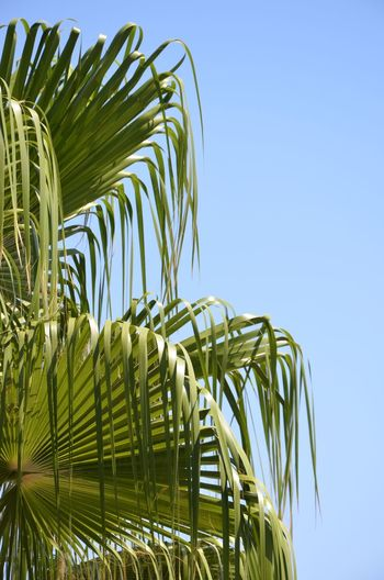 Sky Leaf Palm Leaf Palm Tree Blue Nature Clear Sky Beauty In Nature Cyprus Relaxing Travel Tropical Climate Green Color Outdoors Plant Sunlight