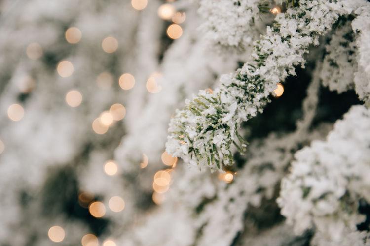 Closeup photo of christmas tree with snow, christmas ornaments, christmas lights, bokeh lights.