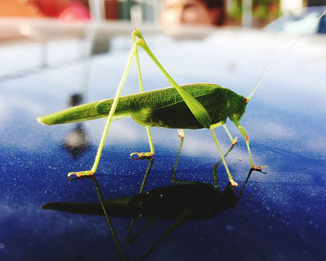 Grasshopper Insect Animal Themes Animals In The Wild One Animal Plant Focus On Foreground Nature Close-up Green Color No People Day Fragility Outdoors