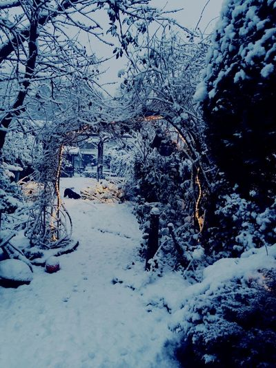 Winter in de tuin ❄️ Snow Winter Cold Temperature Weather Nature No People Beauty In Nature