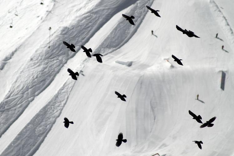 Birds flying against snow