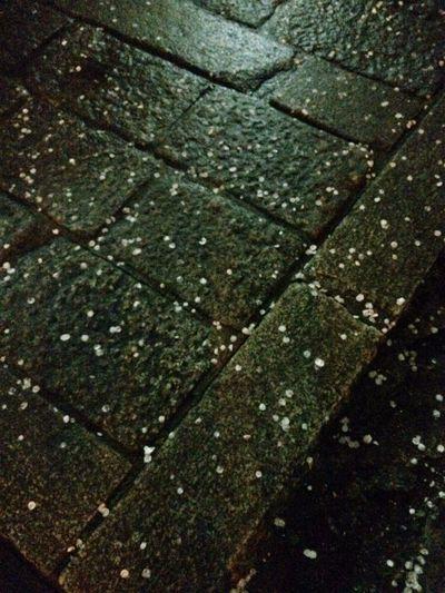 Plum Blossom Petal Petals Stone Pavement Pavement Rainy Rainy Day Ume