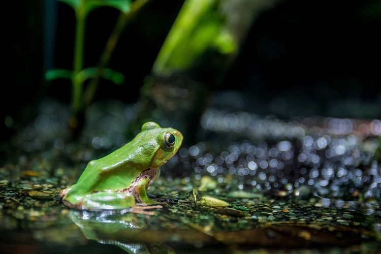 Animal Themes One Animal Water Nature Animals In The Wild Amphibian Green Color Reptile Frog Animal Wildlife Close-up Plant No People Outdoors Day Beauty In Nature
