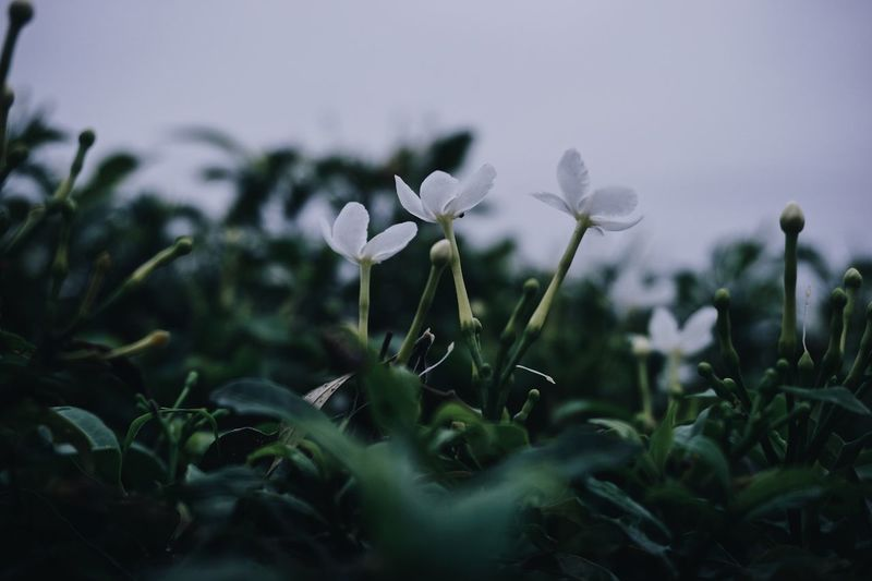 EyeEm Selects Plant Growth Flower Flowering Plant Freshness Beauty In Nature Vulnerability  Green Color Nature No People Focus On Foreground Fragility Selective Focus Leaf Plant Part Petal Close-up Day Field Outdoors