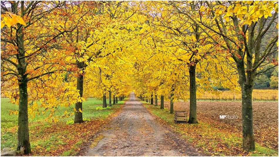 Autumn Colors Autumn Autumn Collection Tuscany
