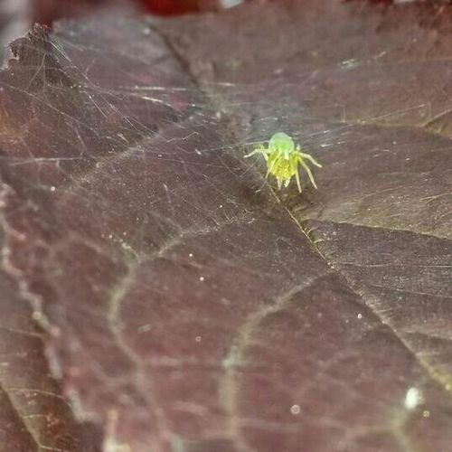 Autumn Colors Autumnleaves Spiders Photography