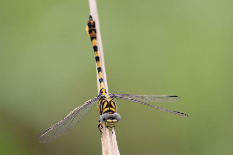 Learn to photograph macros with dragonflies in rice fields around the house