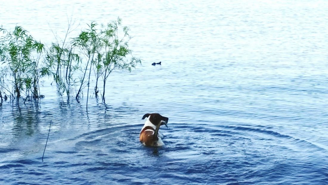 Swimming Peace And Quiet Quality Time Outdoor Photography Animal Photography