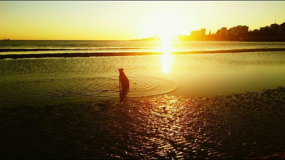 Kuma Playa Ramirez Montevideo Uruguay♥♥