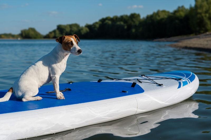 Dog on boat in lake