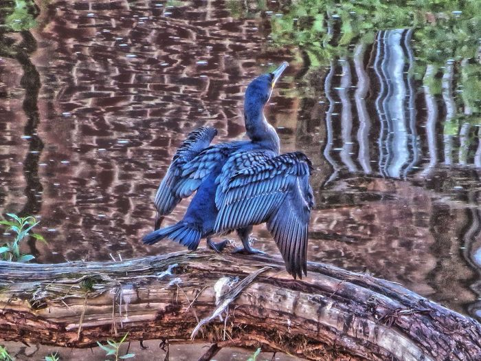 Taken this morning by the river Hdr_Collection Nature_collection Eye4photography  Water_collection