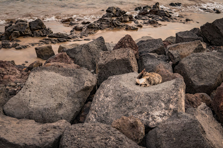 Nature No People Lanzarote Canary Islands Canarias Travel Volcanic Landscape SPAIN Cat Stray Animal Stray Cat Stray