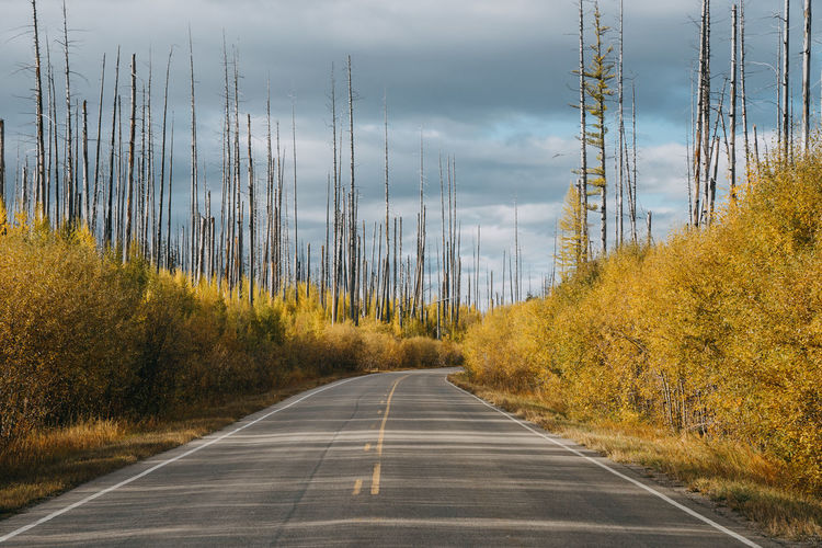 Montana Glacier National Park Road Us National Park Transportation Burn Forest Plant Tree Direction The Way Forward No People Nature Sign After Fire Road Marking Symbol Marking Day Diminishing Perspective Connection Sky Land Beauty In Nature Outdoors Dividing Line