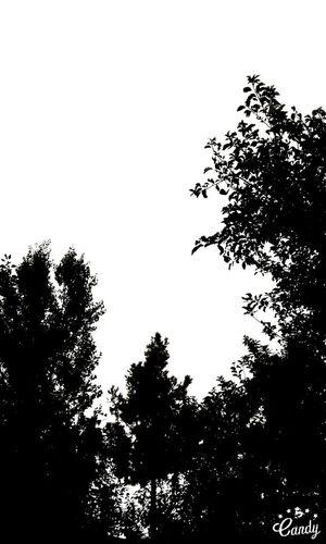 Alacakaranlık Efsanesi Yeniden Doğuyor Tree Sky Nature No People Social Issues Vertical Cloud - Sky Outdoors Beauty In Nature Day Alacakaranlık Efsanesi Yeniden Doğuyor Alacakayamermer Alacakayamarble Alacakarnlık Alacakaranlık Alacakaya Alacakaranlik Alacakaranlıkk TCPM