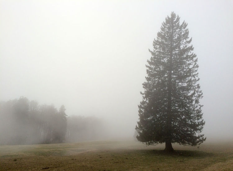 Beauty In Nature Field Fog Landscape Mist Nature No People Tranquil Scene Tranquility Tree Weather
