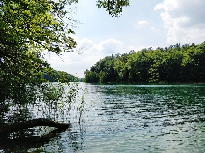 Sunshine Good Weather Lakeshore Lake View Waterfront Forest Nature Summer Excursion Holiday Freedom Brandenburg Liebnitzsee Tree Water Lake Reflection Forest Flood Sky Grass Cloud - Sky Lush Foliage Woods Greenery Green Countryside The Great Outdoors - 2018 EyeEm Awards