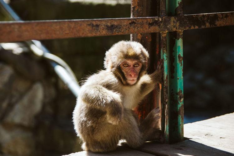Portrait of monkey sitting by railing in zoo