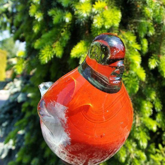 Szklany ptaszek Birds Garden Color Photography
