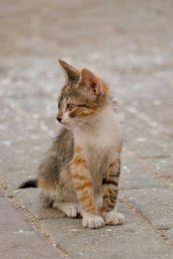 Cat looking away while sitting on street