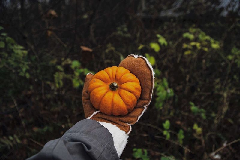Close-Up Of Hand Holding Pumpkin