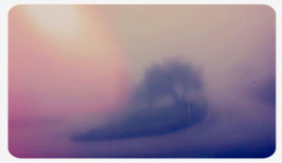 Thismorning in the Fog.