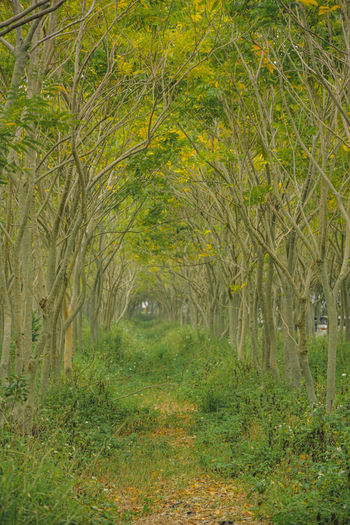 Agriculture Beauty In Nature Day Forest Grass Green Color Growth Landscape Nature No People Outdoors Tranquility Tree