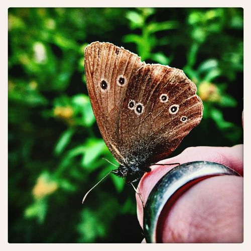 it is all around you Butterfly Moment