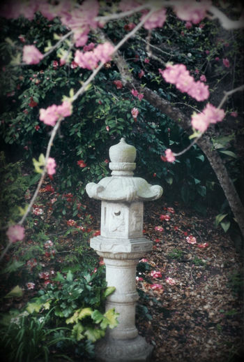 Blooming Blossom Cherry Blossoms Day Japanese Garden Japanese Lantern Nature No People Tranquility
