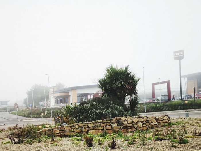 Sainsbury's roundabout Foggy Foggy Day Frog Perspective Foggy Morning Plants Plants And Flowers Plants 🌱 Plants Collection Roundabout Roundabout Art Tree Fog Sky Architecture Built Structure Mist Weather