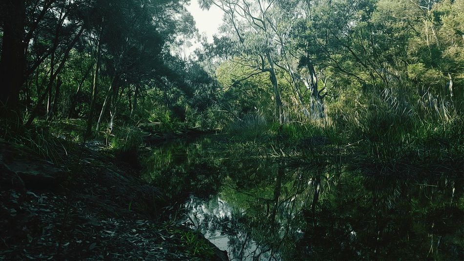 Tree Water Forest Reflection Tranquility Tranquil Scene Nature Waterfront Green Color Wilderness Oil Effect Oil