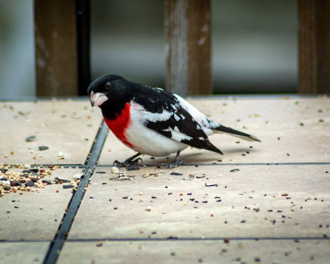 Close-up of bird perching on floor