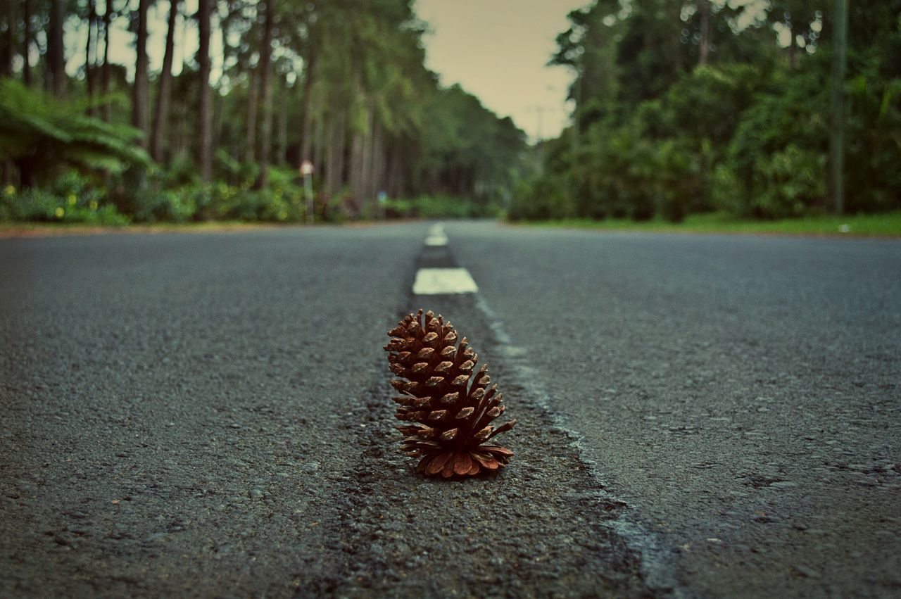 road, day, surface level, outdoors, leaf, food and drink, tree, selective focus, no people, acorn, nature, nut - food, close-up, focus on foreground, food, freshness