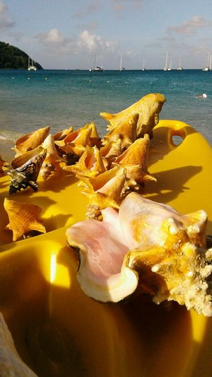 Conch shells. Conchshell Transportation Sea Colour Of Life Sky Outdoors Beachlife Beach Close-up Isnaplife