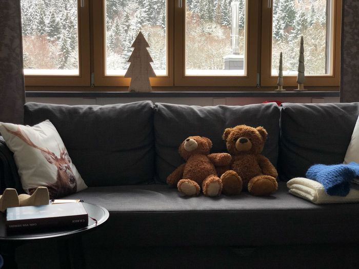 Teddybären EyeEm Selects Indoors  Window Sofa No People Furniture Home Interior Day Living Room Curtain Stuffed Toy Window Sill Still Life Domestic Room Table Nature Glass - Material Toy Architecture Pillow Representation