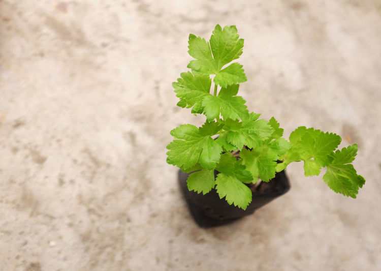 High angle view of plant growing on table